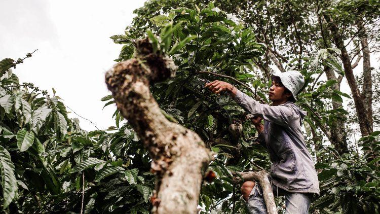 Tidak Sekadar Menanam, Para Petani Diajak Cara Merawat Tanaman Kopi Melalui Pelatihan Dompet Dhuafa