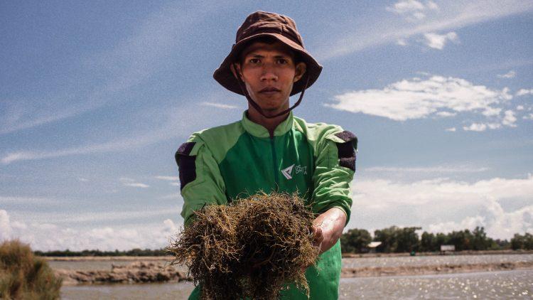 Petani Program Muda Berdaya Rumput Laut DD Sulsel Telah Melakukan Panen Perdana