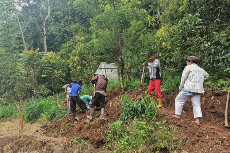 Memasuki Musim Panen, Petani Kopi Patongko Membuka Jalur Kendaraan Menuju Rumah Kopi
