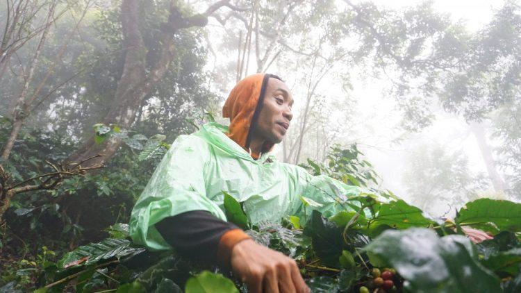 Dompet Dhuafa Sulsel Kenalkan Pemberdayaan Kopi Pattongko Dan Upayanya Kurangi Kemiskinan