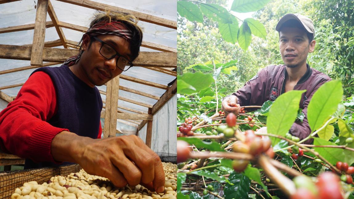 Telusur Kisah: Mengenal Kopi Pattongko Dan Upayanya Untuk Mensejahterakan Petani Pelosok